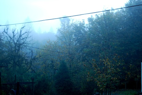 foggy-morning-1